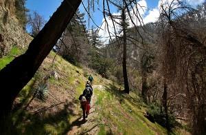 Down the mountain (Brian van der Brug / Los Angeles Times)