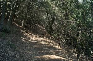 Burnt Peak Canyon Trail - one of the good sections