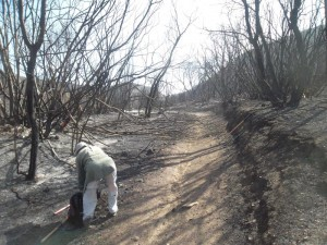 We had to clear a lot of chaparral that had fallen across the trail