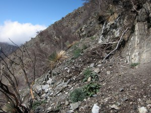 Station fire damage to Strawberry Peak trail
