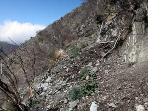Station fire damage to Strawberry Peak trail