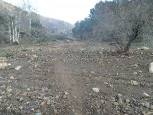 Mud has buried the main Sycamore Canyon Trail. Photo by Dave Edwards.