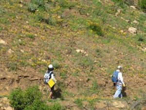 Fields of wildflowers surrounded us as we worked to restore the trail.