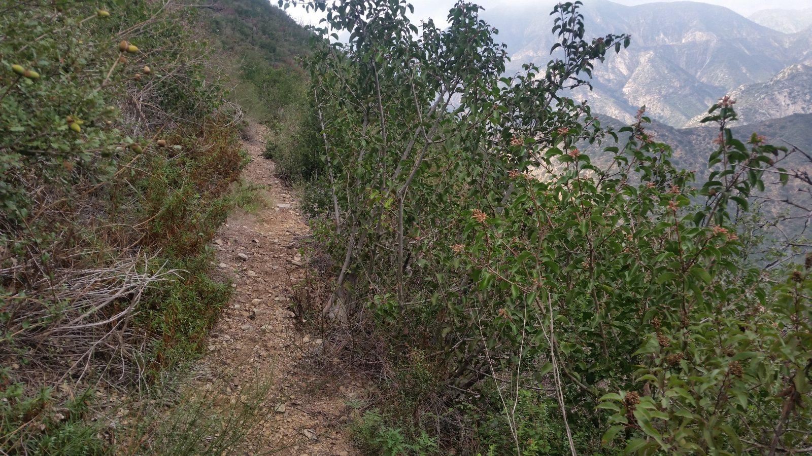 20151015006-Ken Burton Trailwork Scouting