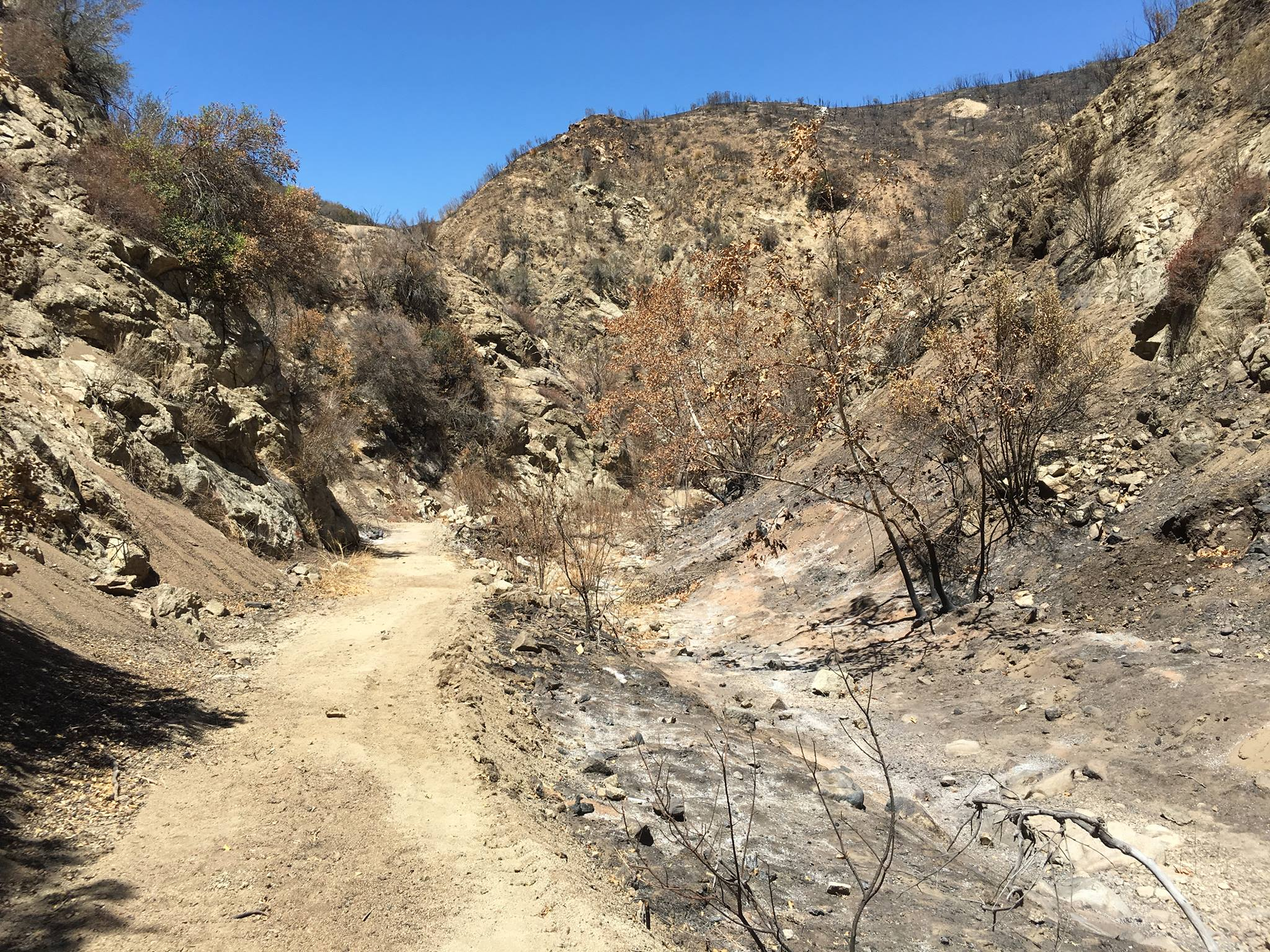 Canyon Trail post Sand Fire