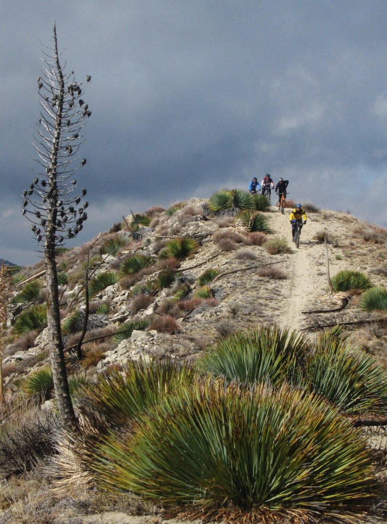 Mountain Bikers descend from Condor Peak